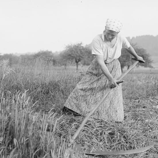femme au champ